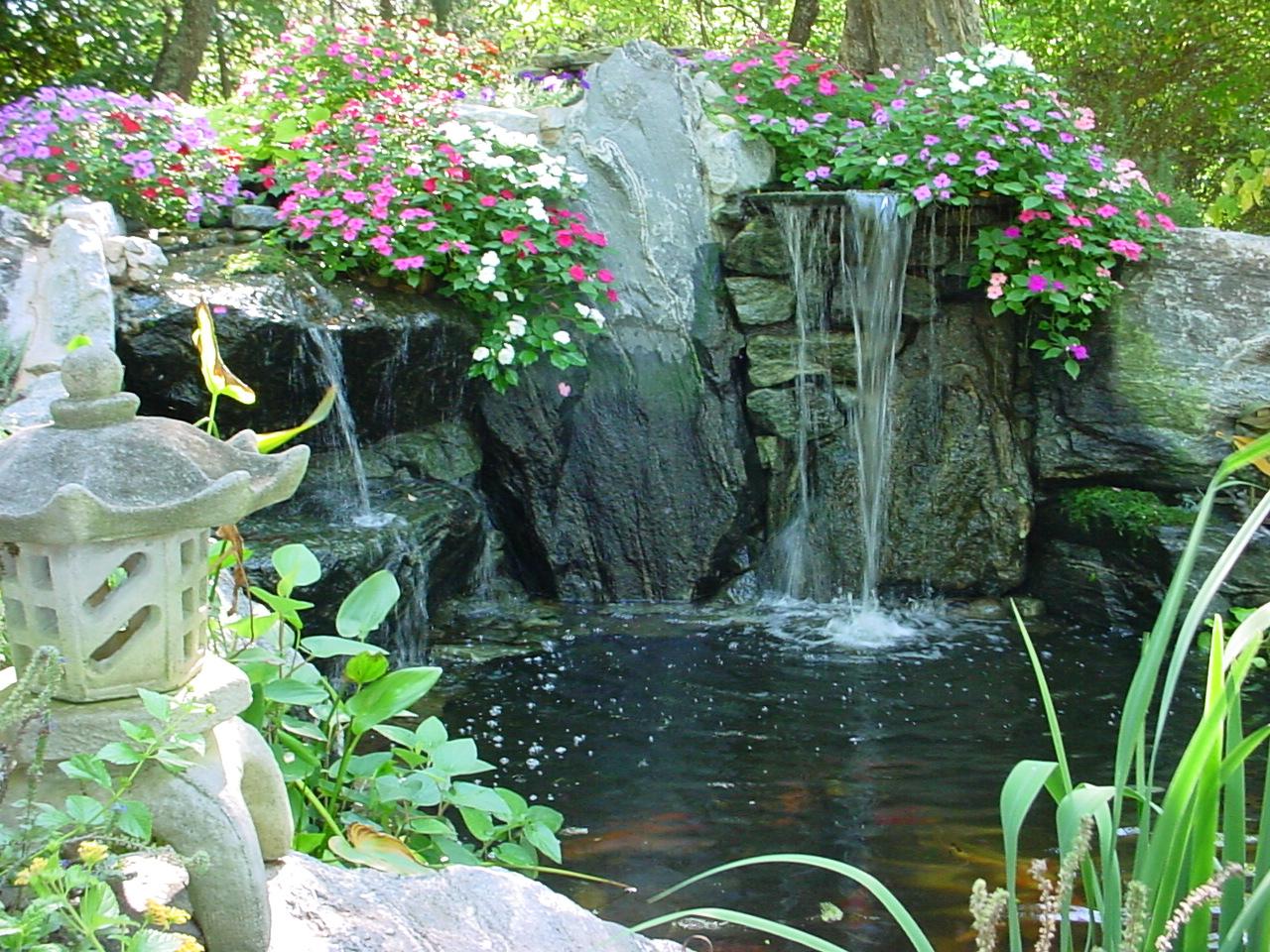 Our Hmome pond