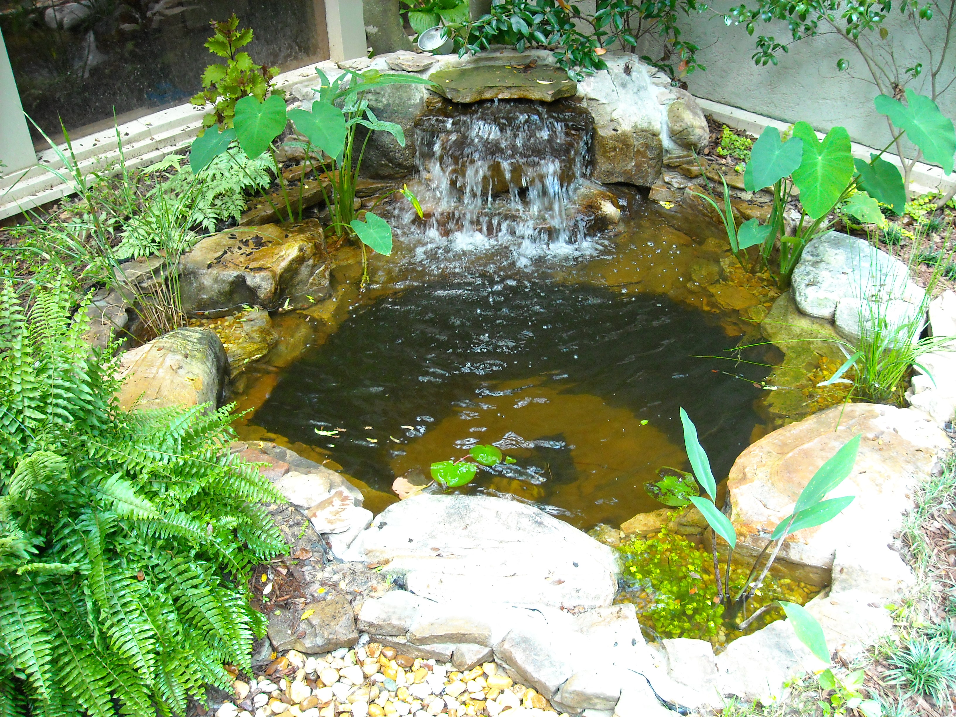 Small Court yard pond