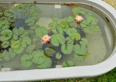 Aquatic plants-